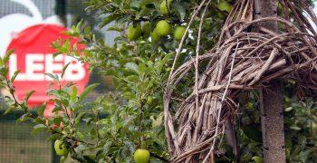 Obstbau Fam. LEEB, Alles Apfel